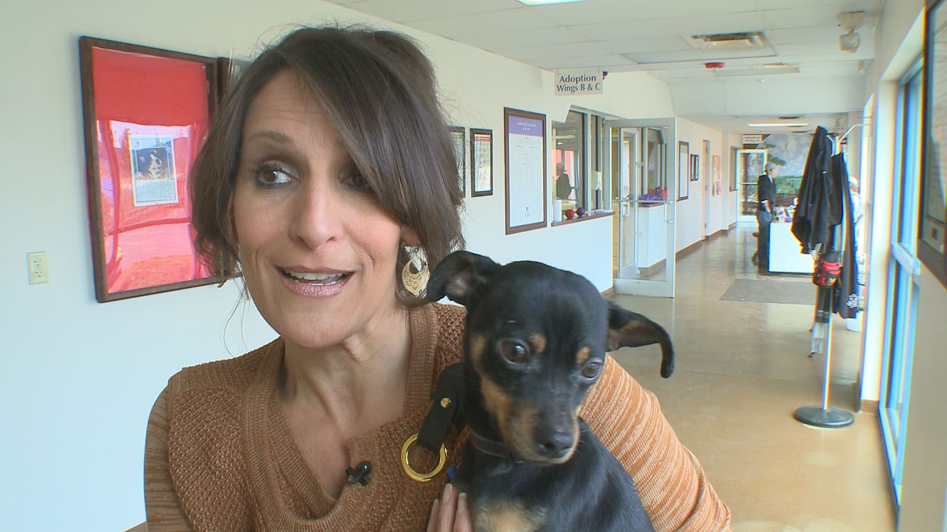 Erie Co Spca Considers Dropping Breed Labels Wgrz Com