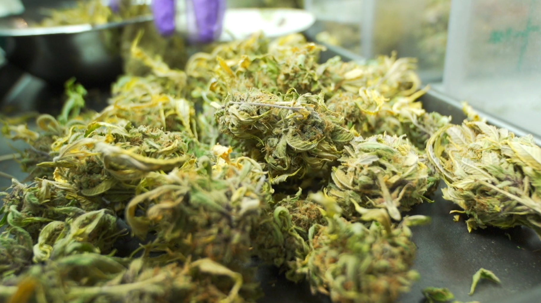 marijuana remains the third most popular Marijuana policy at the state level has shifted significantly in recent years as states have moved to legalize the drug for both medicinal and adult use unfortunately, federal marijuana policy remains rooted in the past, as all types of marijuana continue to remain illegal under federal law it is time for congress and the administration to face the.